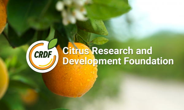 What is CRDF?